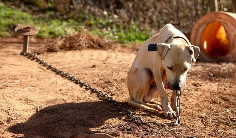 These Dogs Had Horrible Lives…And Then They Were Rescued