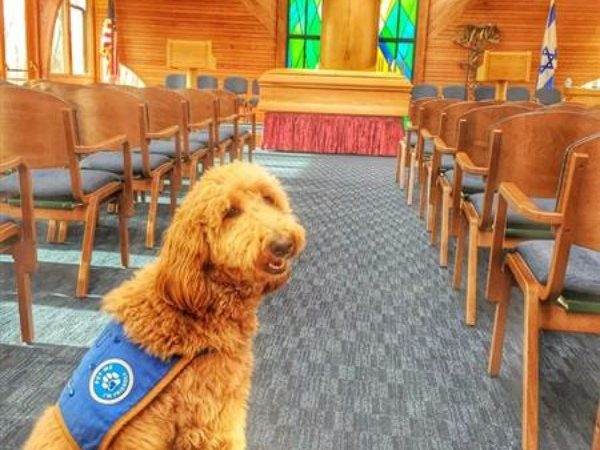 [VIDEO] Lulu, The Amazing Dog Who Helps Grieving Clients