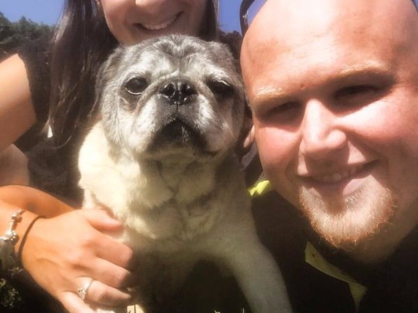 [VIDEO] These Newlyweds Have A Reality Show About Rescuing Dogs!
