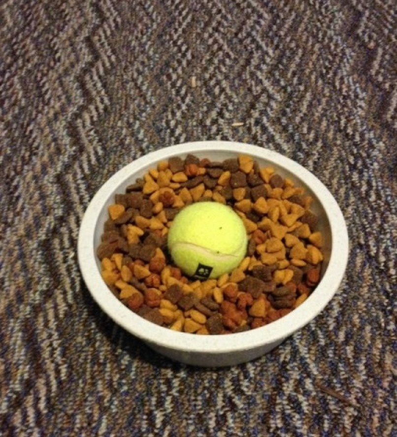 If your dog eats too fast, put a ball in the food bowl.