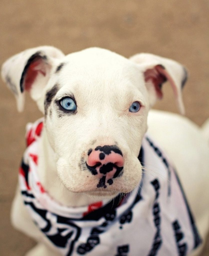 The eyeliner and spots on her nose make this dogso beautiful.