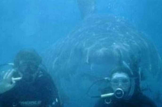 The shark who loves to take selfies.