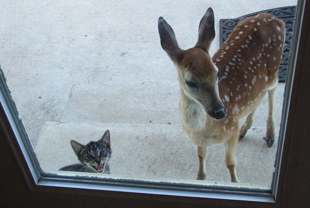 """""""Hey ma, I brought a friend over, is it cool if we play inside?"""""""