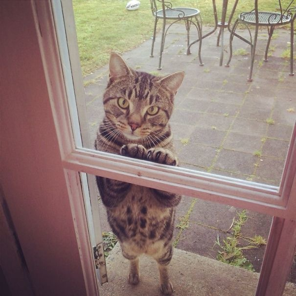 """""""Come on, just let me in. I promise I'm not NOT up to no good."""""""