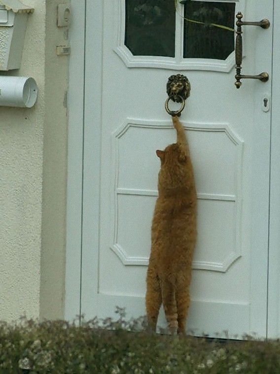 """""""If I hear the humans rocking, I will definitely come knocking."""""""